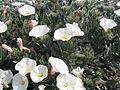 Botanical garden of Barcelona - 2004 - 01.JPG