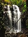 Box Log Falls, Springbrook National Park.jpg