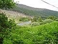 Bracken, Strathconon - geograph.org.uk - 203743.jpg