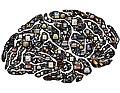 Brain-954822 1280.jpg