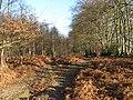 Bridleway in Lodgesale Wood - geograph.org.uk - 1093827.jpg