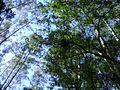 Bromélia no alto 2.jpg