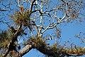 Bromeliads (3330586393).jpg