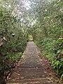 Bukit Lima Nature Reserve 4.jpg