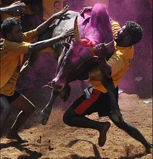 Madurai district - Bull Taming, Alanganallur