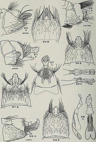 File:Bulletin (1944) (20402712756).jpg