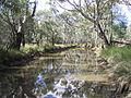 Bundock-Creek-NSW-pond.jpg