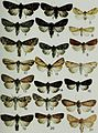 Butterflies and moths of Newfoundland and Labrador - the macrolepidoptera (1980) (19888425774).jpg