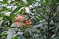 Butterfly Rainforest FMNH 01.jpg