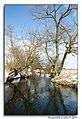 Bystrzyca River (60464704).jpeg