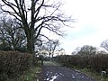 Byway to Sandhill Farm - geograph.org.uk - 320141.jpg