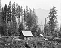 Cabin belonging to William Thompson, near Mount Baker, August 14, 1894 (WAITE 73).jpeg