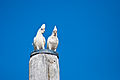 Cacatua sanguinea -Port Stephens -two corellas perching on a post-8.jpg