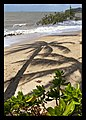 Cairns Clifton Beach coconut tree shadows-3 (4967327554).jpg