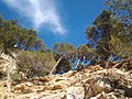 Calanque de Sugiton, cliffs.jpg