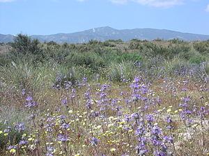 Caliente Mountain - Image: Caliente Mountain