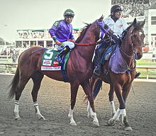 Two horses with riders walking on a racetrack, one leading the other