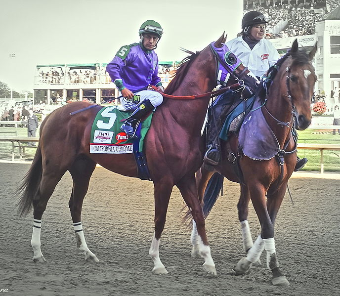 File:California Chrome at 2014 Kentucky Derby.jpg