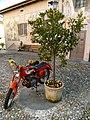 Cannero Riviera - Piazza Bellezza (2).jpg