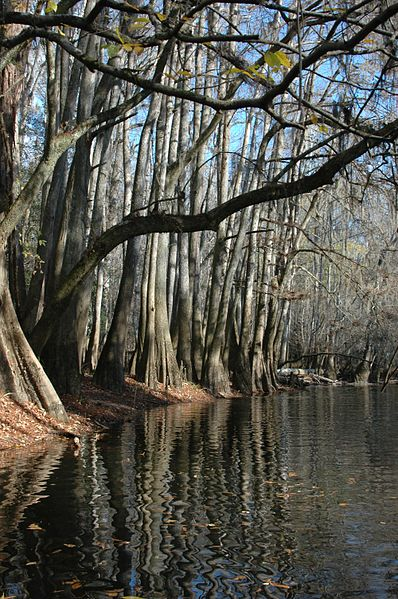 Fichier:Canoe trail in Congaree National Park. NPS-Elaine Leslie (18679036322).jpg
