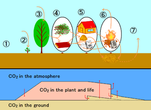 Carbon cycle of carbon neutral plant. Upper fi...