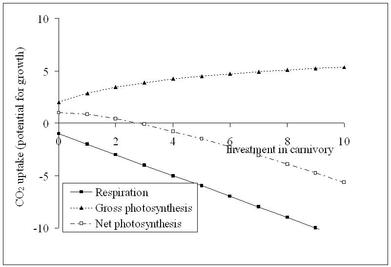 Carnivorous plant model 2