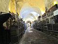 Catacombe dei Cappuccini Corridoio Professionisti.jpg