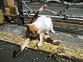Cats in t1302Cats in the Philippines 13.jpg