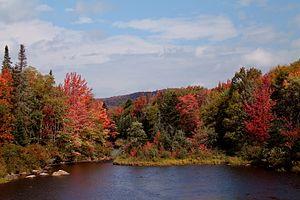 Cedar River (New York) - Cedar River Flow in the fall