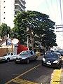 Centro, Franca - São Paulo, Brasil - panoramio (223).jpg