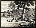Chauveau - Fables de La Fontaine - 07-16- La Tête et la Queue du serpent.jpg