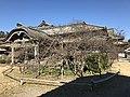 Cherry Tree in garden of Former Residence of Nabeshima Family in Kojirokuji Area 2.jpg