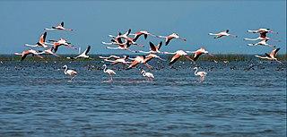 Chilika Lake lagoon in India