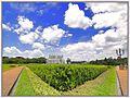 Cidade de Curitiba - Brazil by Augusto Janiski Junior - Flickr - AUGUSTO JANISKI JUNIOR (2).jpg