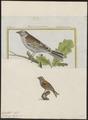 Citrinella cia - 1700-1880 - Print - Iconographia Zoologica - Special Collections University of Amsterdam - UBA01 IZ16100257.tif