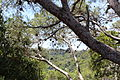 "Cliff Observatory, Kelach Wadi, Carmel Park ""Little Switzerland"" IMG 9067.JPG"