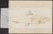 Clupea pilchardus - 1774-1804 - Print - Iconographia Zoologica - Special Collections University of Amsterdam - UBA01 IZ15100055.tif