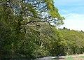 Coed Cae Fali - geograph.org.uk - 1312202.jpg