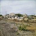 Collectie Nationaal Museum van Wereldculturen TM-20029515 Landschap met dolomieten en schapen Aruba Boy Lawson (Fotograaf).jpg
