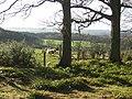 Colstoun Wood - geograph.org.uk - 143854.jpg