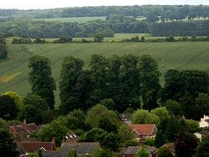 Tilia × europaea - Common limes in the landscape, King's Somborne, UK