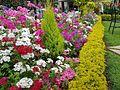 Connoor flowers site 02.jpg