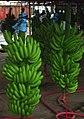 Costa Rican banana bunch.jpg