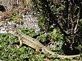 Cotopaxi Nationalpark Ecuador124.JPG