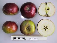 Cross section of Franc Roseau, National Fruit Collection (acc. 1947-086).jpg