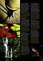 Cuba - Parque Nacional la Bayamesa (2005) (20180171364).jpg