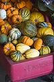 Cucurbita pepo small edible mini 9563- Pumpkin Wagon.jpg
