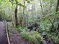 DSCN6219 Helensburgh Duchess Wood.jpg