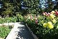 Dahlia @ Parc Floral @ Paris (29528335553).jpg