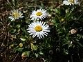 Daisy in Sun 03 23 21.jpg